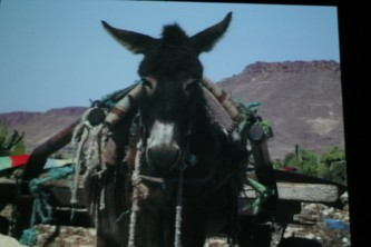 A shot of a screen showing a donkey laden with items