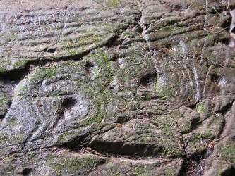 Rock carvings in a forest